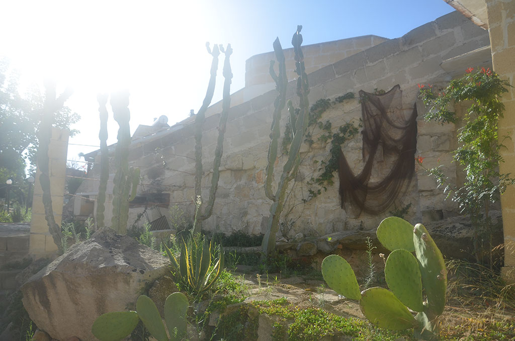 Kaktus und Fischernetz