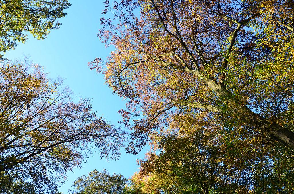 Baume von unten