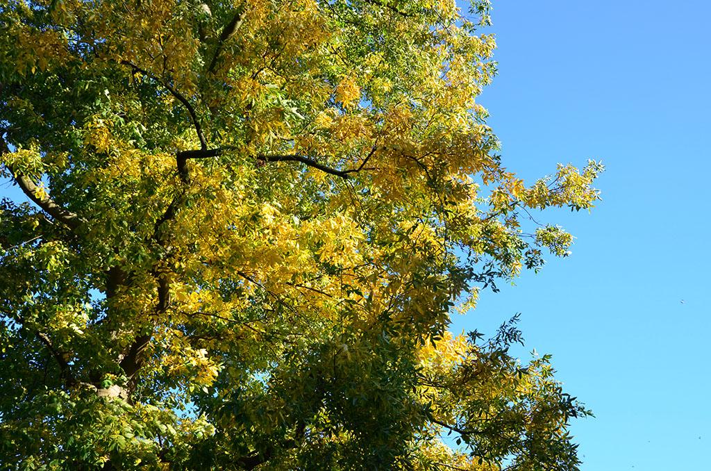 Gelbe Blatter und Himmel