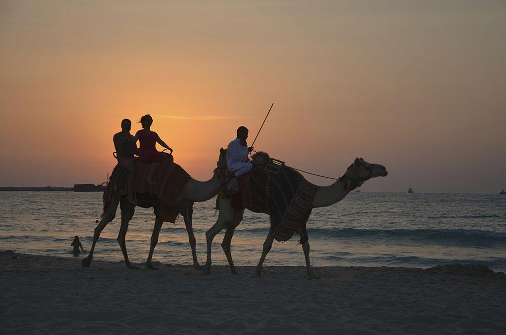 Kamele bei Sonnenuntergang