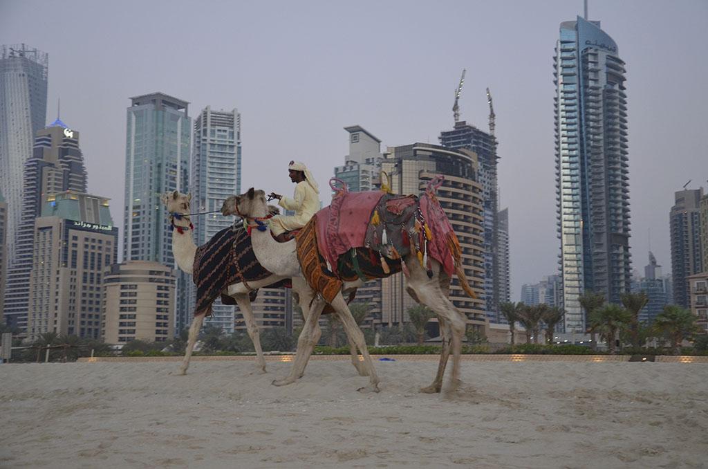 Kamele vor Wolkenkratzer